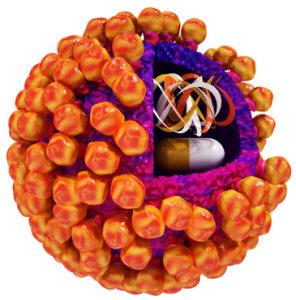 Вирус папилломы может вызывать рак
