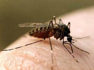 Укус насекомого - причина зуда в родинке
