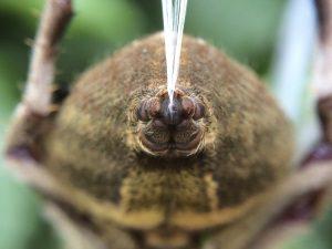 Вид паутинных бородавок